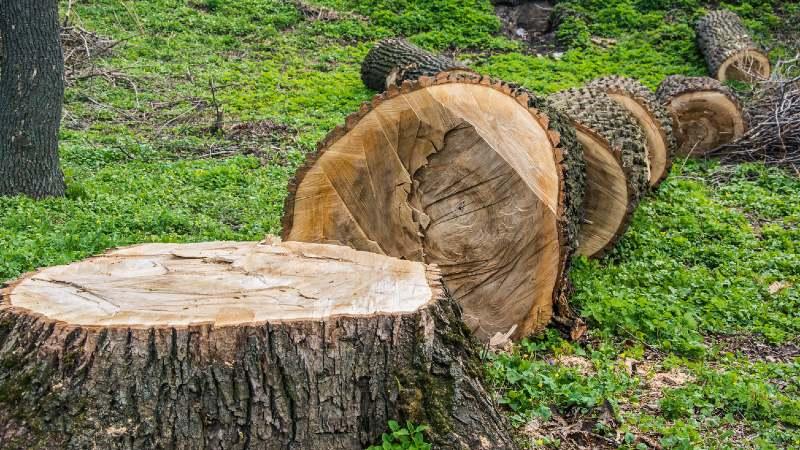 prix abattage arbre