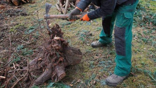 tarif abattage arbre