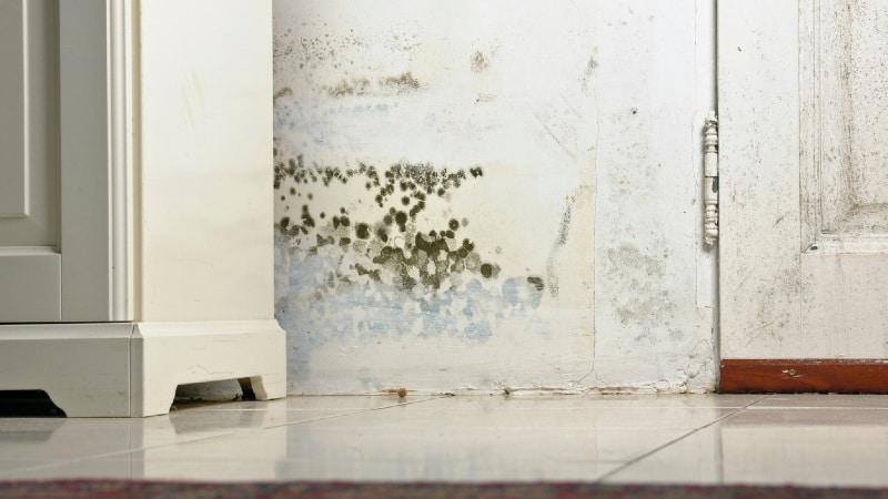 tarif decontamination moisissures